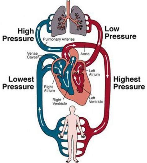 pattern of heart blood flow heart blood flow diagram diagram site