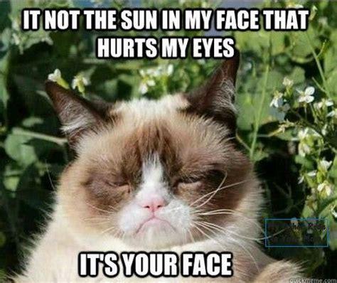 Grumpy Face Meme - grumpy cat funny meme let the laughter begin pinterest
