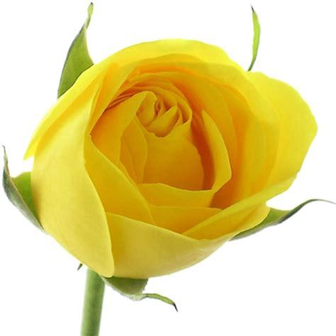 imagenes variadas de rosas 174 colecci 243 n de gifs 174 im 193 genes de flores variadas