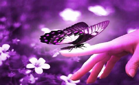 imagenes mariposas en movimiento im 225 genes de mariposas con movimiento imagui