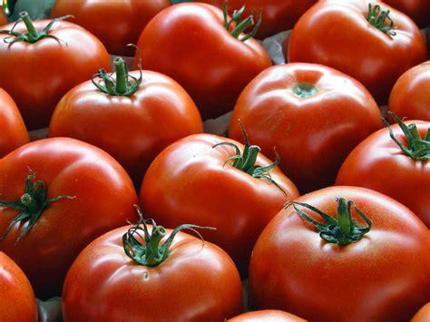 cucinare i pomodori ricette con pomodori freschi