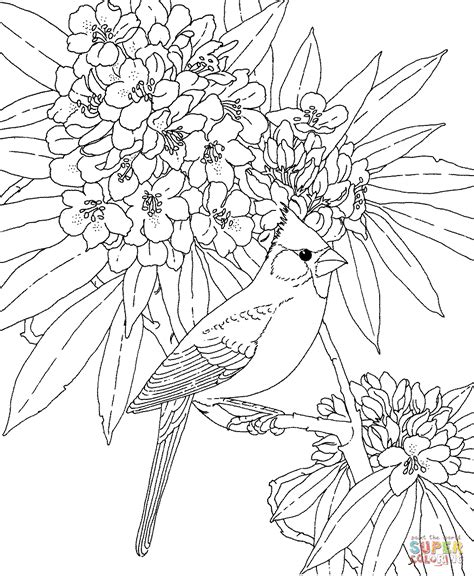 coloring pages of state birds and flowers cardinal and rhododendron west virginia bird and flower