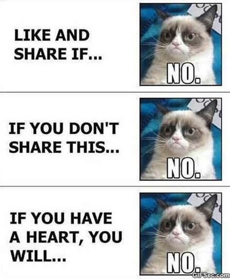 Grumpy Face Meme - grumpy cat vs facebook meme 2015 meme collection