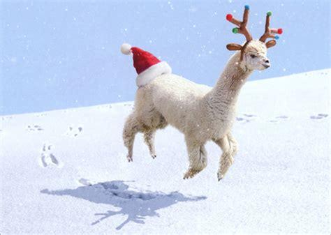 alpaca reindeer funny humorous christmas card  avanti press