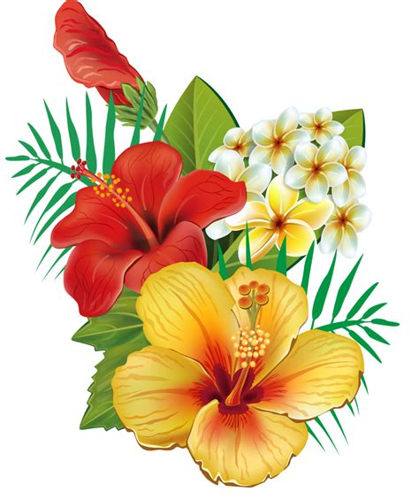 6 png hawaiian flowers and clip art