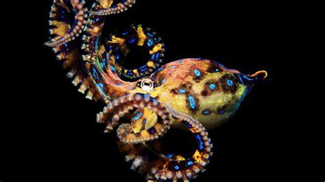 colorful octopus wallpaper octopus wallpaper 1920x1080 58841
