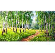 Birch Forest Wallpaper  ForWallpapercom