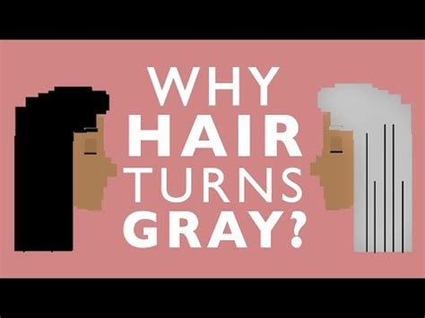 why does hair turn gray scientiflix why your hair will turn gray why does hair