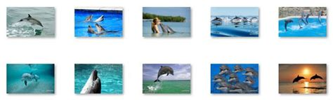 cute themes for windows 8 cute funny dolphins windows 8 theme