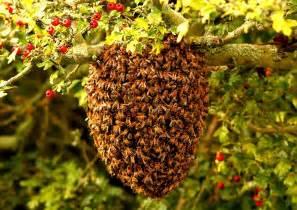 bee nest the wilden marsh blog
