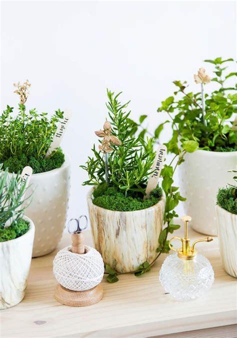 ready  spring  creating    herb garden