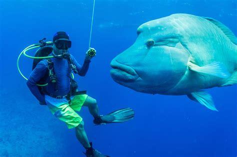 dive a scuba diving community diving centers