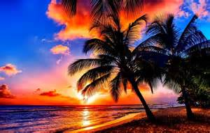 Wallpaper sunset sea trees palm images for desktop section