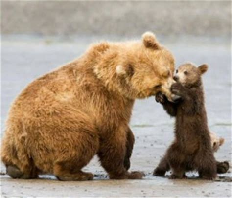 funny bear stories and pictures. interesting facts about