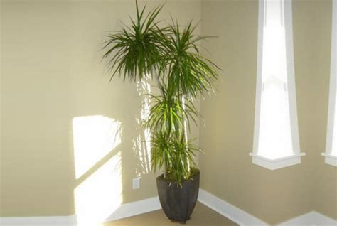 Office Plants That Don T Need Sunlight by 7 Beautiful Indoor Plants That Don T Need Sunlight To