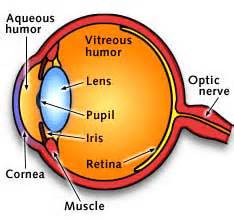 what is the colored part of your eye called explain structure of human eye meritnation