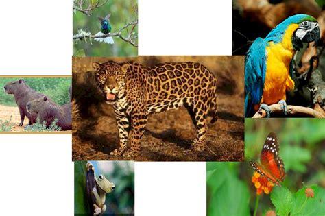 imagenes de venezuela flora y fauna flora y fauna
