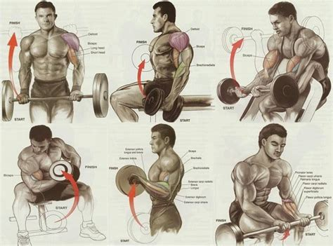 exercises for best biceps workout for mass all