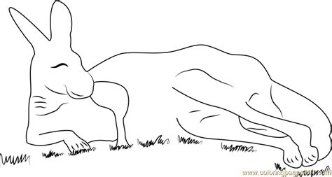 kangaroo coloring pages pdf red kangaroo coloring page kangaroo coloring page pdf