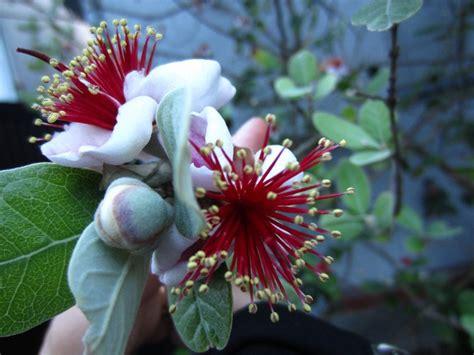 japanese flowers are so beautiful little aesthete s blog