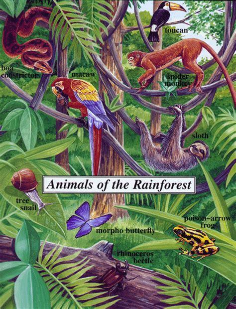 common plants in a tropical rainforest rainforest home