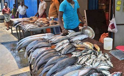 fishing boat price in chennai live chennai fish price up by 30 percent in chennai fish