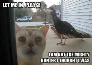 20 funny animal pictures to help you get through monday ned hardy