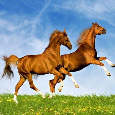 Sho Kuda Yang Kecil rakyat hewan fabel dongeng dua ekor kuda