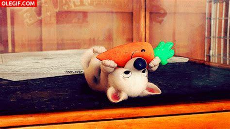 imagenes gif zanahorias gif a este perrito le gustan las zanahorias gif 6424
