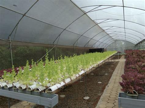 supplier sayuran organik  hidroponik langsung petani