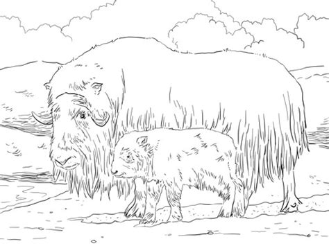 musk ox mother  baby coloring page supercoloringcom