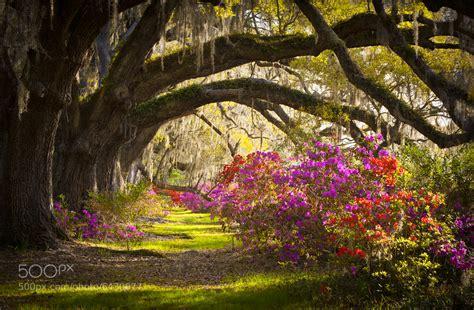charleston sc magnolia plantation gardens memory by