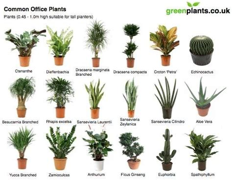 best indoor plants for no sunlight office plants interior plants and plants on pinterest