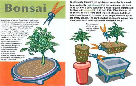 Garden Crafts by Bonsai Marijuana Plants Quotes