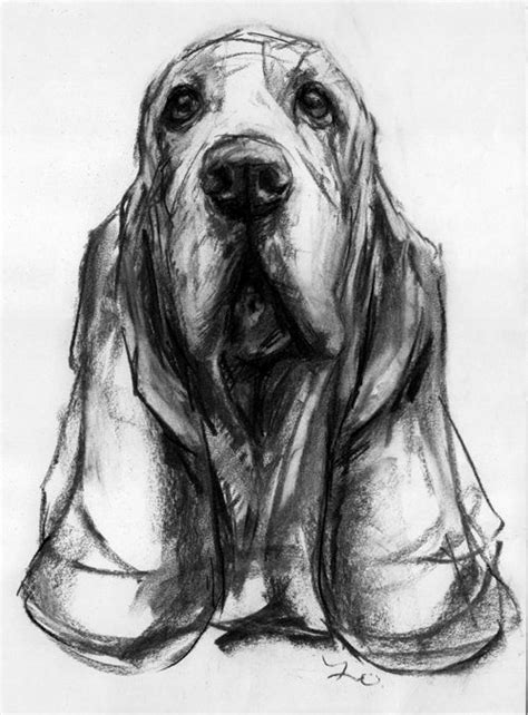 charcoal for dogs dogs in at the stockbridge gallery basset hound charcoal drawing by justine