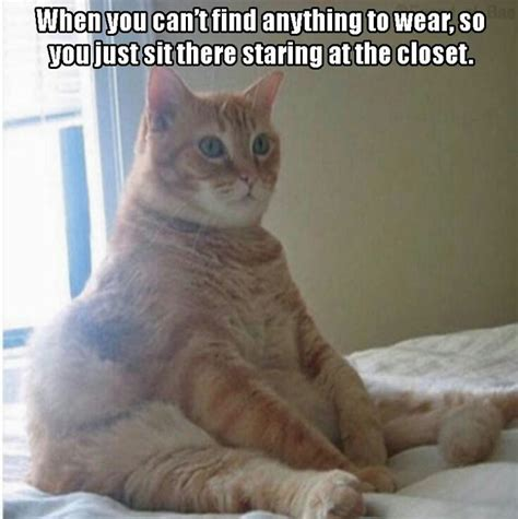 Meme Images Funny - funny staring cat meme funny cats downloadfeast