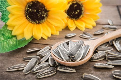 sunflower seeds health benefits nutrition facts history