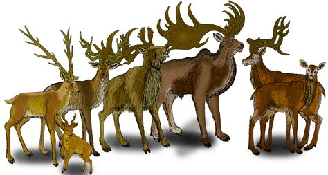 deer breeds the elk and other prehistoric deer species outdoorhub