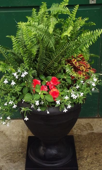 boston fern shade planter mike s garden guide