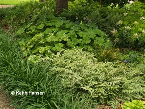 best plants for shade with lights shady characters you want in your garden east gardening