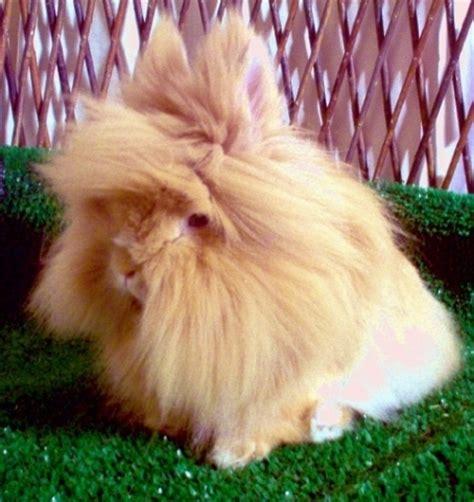 coniglietti nani alimentazione conigli testa di conigli