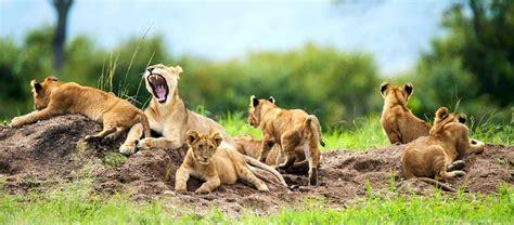 consolato kenya visto kenia visto per kenia