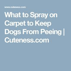 home remedies to keep dogs from peeing in the house what to spray on carpet to keep dogs from peeing dog pee carpets and dogs