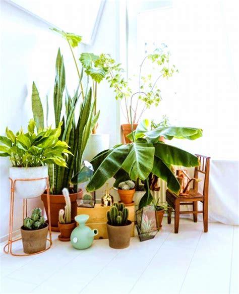 using plants in home decor 元気な観葉植物の育て方4つのポイントとよくあるトラブル対処法