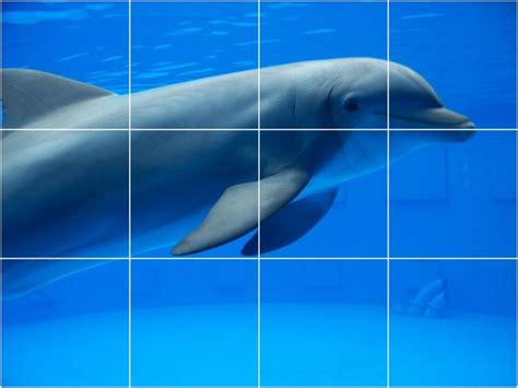 Bathroom Dolphin by Dolphin Picture Kitchen Bathroom Ceramic Tile Mural 24 X