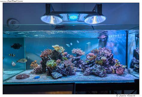 test acquario marino tunze doc skimmer 9415 review reefs