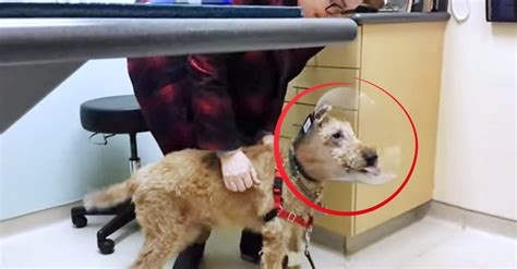 happy puppies net reaction omg this s reaction to seeing his family after eye surgery is priceless