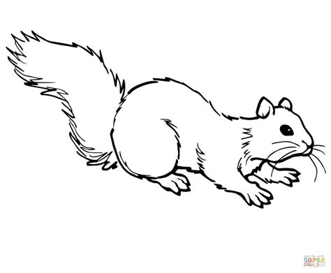 coloring page of a gray squirrel grey squirrel on ground coloring page free printable