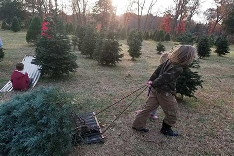 laron farm virginia best places to cut your own tree richmond