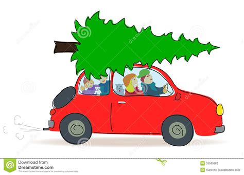 christmas tree transport by car stock photography image